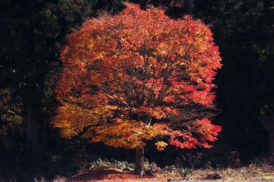1120今日一番の秋色。.JPG