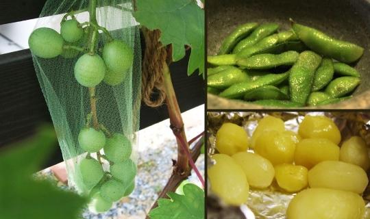 7月の収穫。.jpg