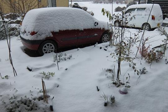 初雪は11月。.JPG
