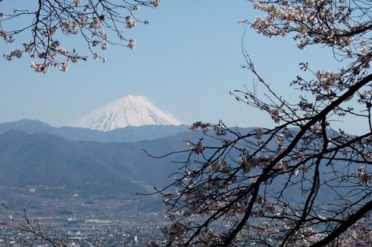 富士と桜。.jpg