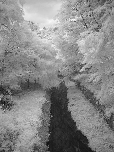 森の中で-2。.jpg