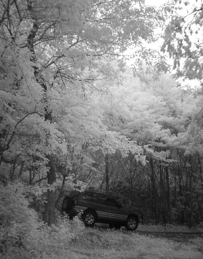 森の中で。.jpg