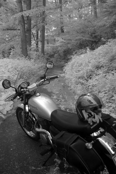 森の小路へ.jpg