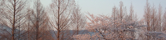 Sakura scheme2009.jpg