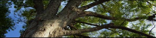 Woodland scheme.jpg