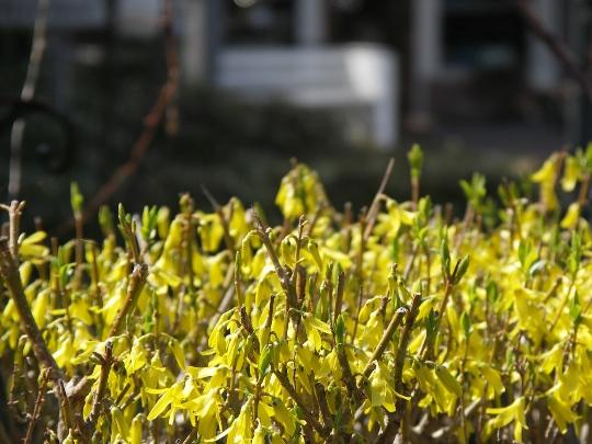 0409春の色。.jpg