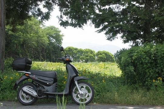 0528初夏の散歩。.JPG