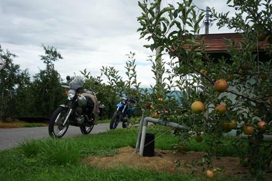 0815林檎畑で一休み。.JPG