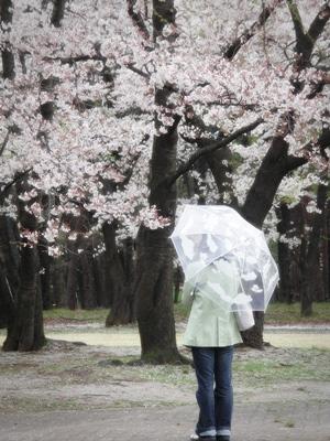 傘に雲。.JPG
