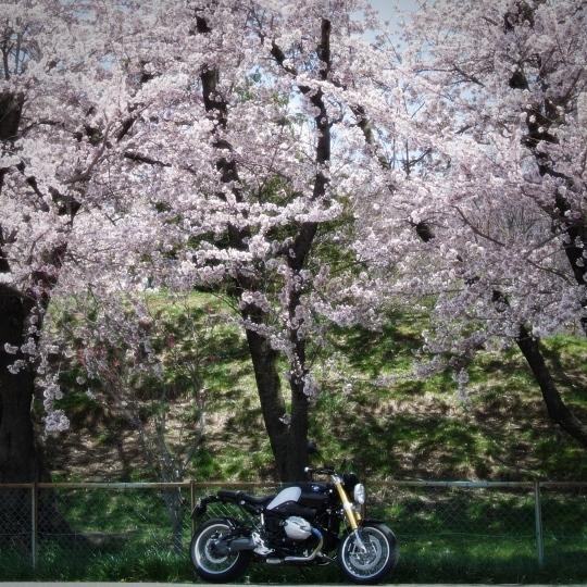 春になった。.jpg