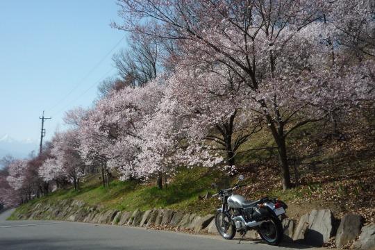 桜山。.jpg