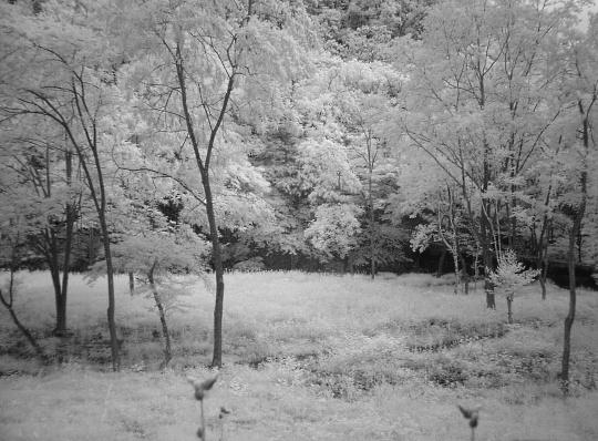 森林浴。.jpg